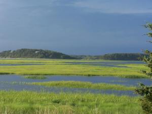 High tide on a saltmarsh.