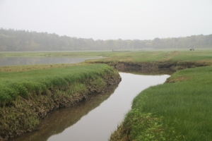 Humans historically dug ditches to drain marshes to reduce mosquito numbers, but it probably increased them by reducing habitat for mosquito-eating fish.