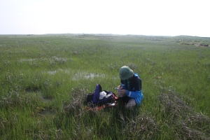 Julie setting up for a point in a sea of Spartina.