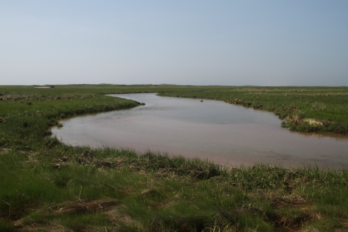 "A common marsh ""obstacle."""