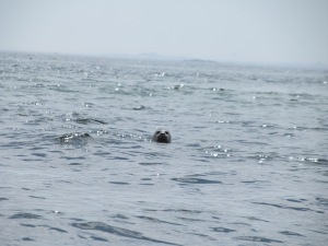 It's a seal...maybe its a buoy...yeah, it's a seal.