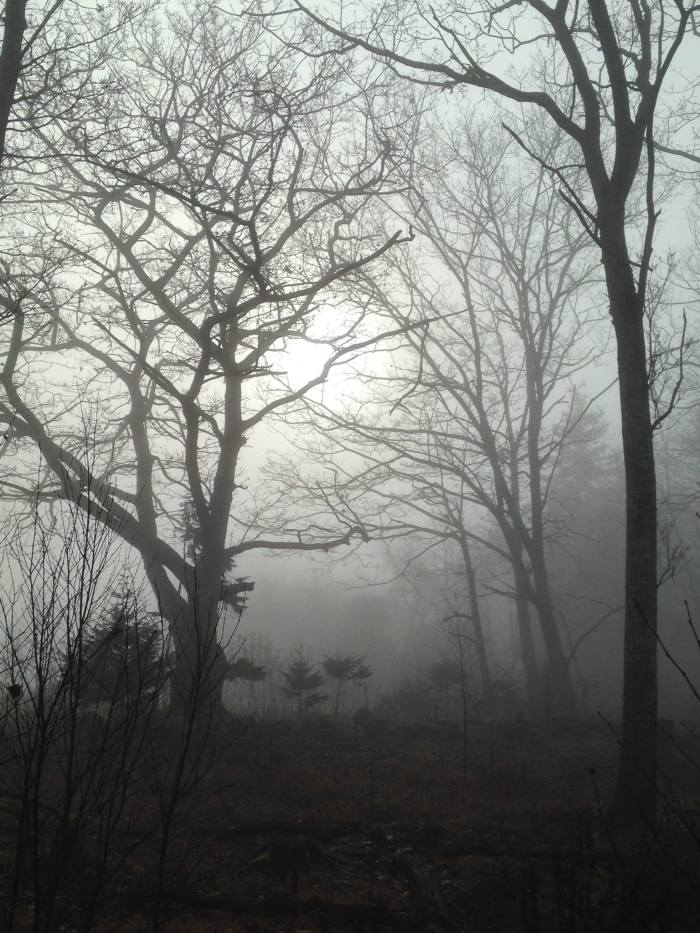 maine-trees-fog